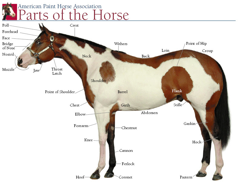 Horse S Body And Color